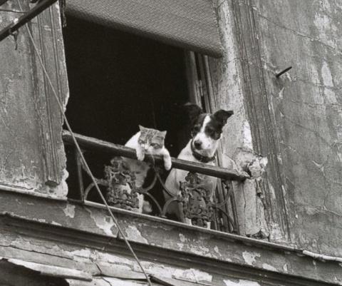 Собаки и кошки: кто умнее
