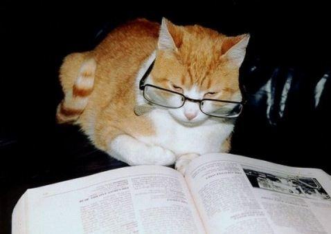 Правила умной кошки