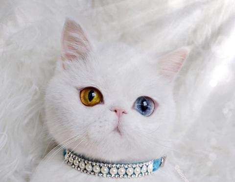 Пам Пам — кошка сказочной кр…
