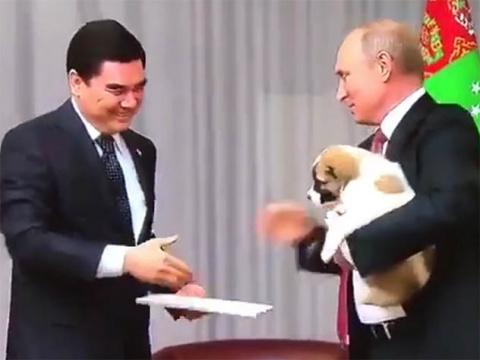 Видео с новым щенком Путина вызвало бурное обсуждение