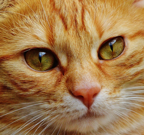 В Калининграде МЧС спас котёнка из машины