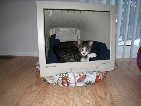 Креативные домики для животн…