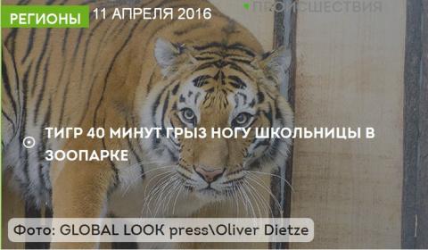 Тигр 40 минут грыз ногу школ…