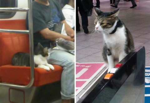 Кошка из Токио умеет самосто…