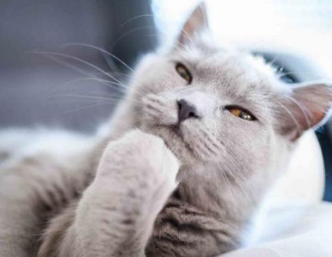Кошки, задумавшиеся о чём-то…