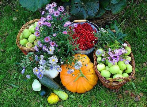 10 типичных ошибок садовода