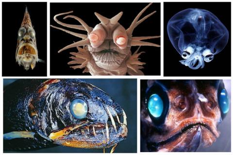 Невероятные монстры океанской бездны