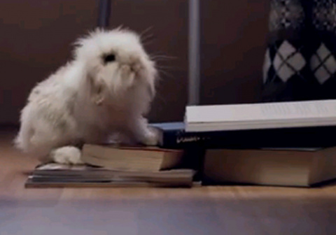 Няшные кролики рекламируют отель