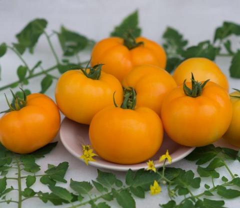 Желтые томаты на страже вашего здоровья