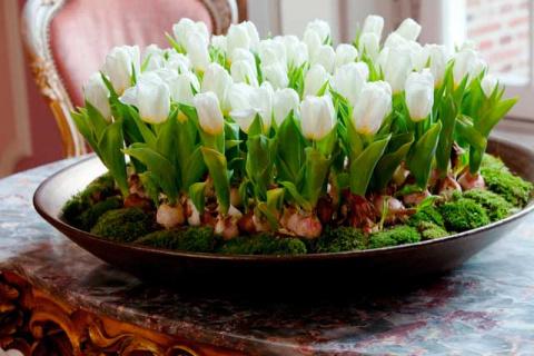 Как вырастить тюльпаны, нарциссы, гиацинты и мускарики к Новому году