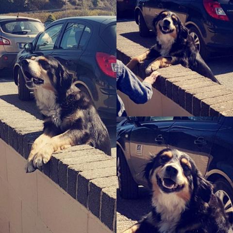 Этот пес каждый день ходит в…