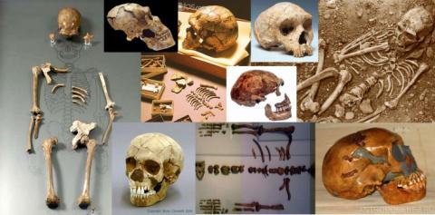10 мифов об эволюциии человека