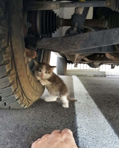 Парень увидел под машиной ко…