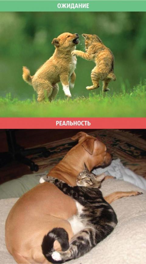 О жизни с котом))) Пост хоро…