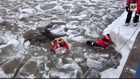 Спасение собаки из ледяной воды в Мичиганском канале