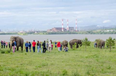Экзотика Магнитогорска - слоны на фоне заводских труб и православного храма