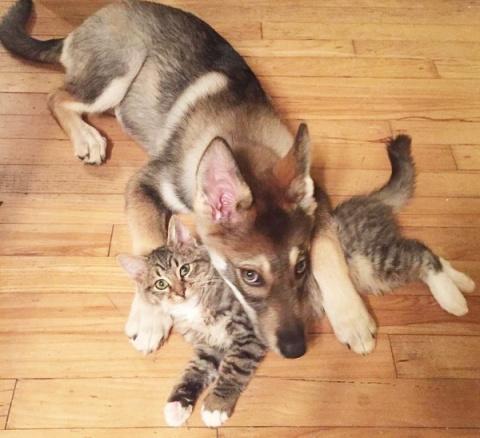 Как собака себе кота выбрала