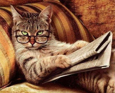 Сколько лет живут кошки по человеческим меркам?