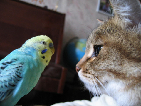 Попугай Филечка говорит с котом. Очень смешное видео!