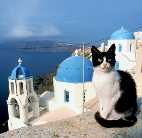 Эти удивительные греки