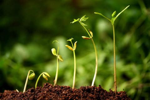 Промораживание почвы