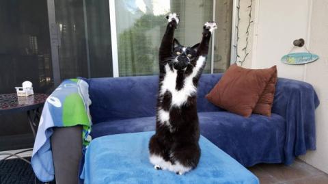 Удивительная кошка позирует …