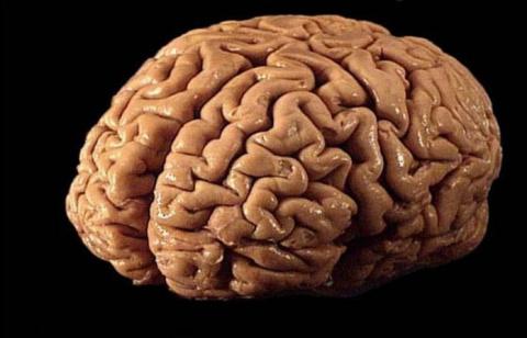 8 удивительных фактов о чело…