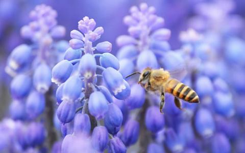 Что сделать, чтобы пчелы полюбили ваш сад?