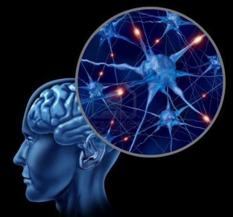 Регенерация мозга возможна, …