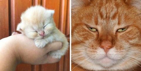 """""""До"""" и """"после"""" — 10 милейших доказательств того, что коты растут ну очень быстро…"""
