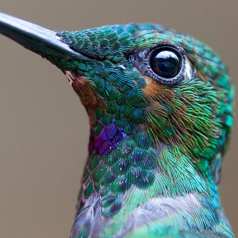 Невероятная красота. Птицы колибри.