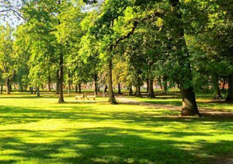 В Бельгии планируют озеленят…