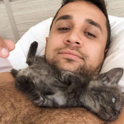 Крошечный котенок с тремя ла…
