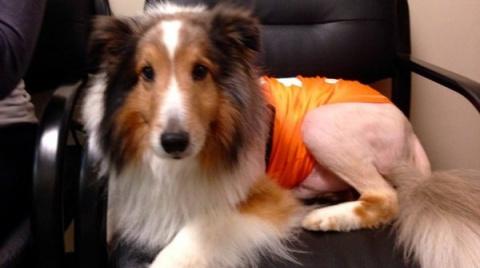 В США ветеринар-стажер спас …