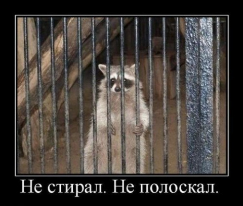 Субботняя котоматрица: енототерапия