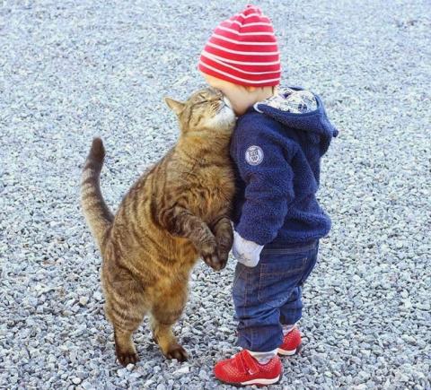Коты и малыши. Свежая подборка приколов с котами. (видео)