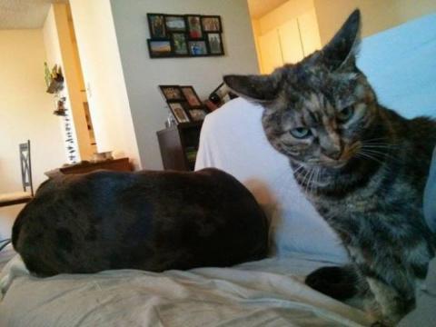 Забавные фото с кошками и собаками