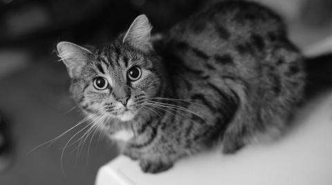 Линька у кошек: причины, сим…