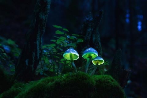 Удивительное в природе - све…
