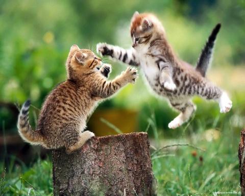 Наглый соседский кот