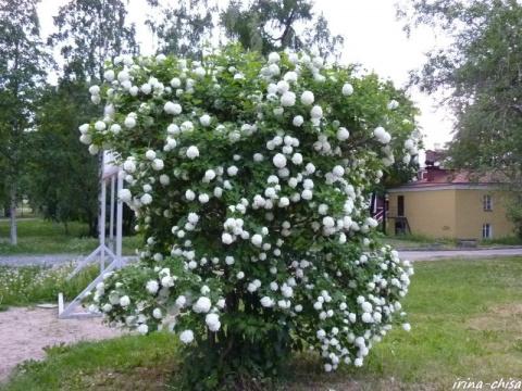Прекрасные растения