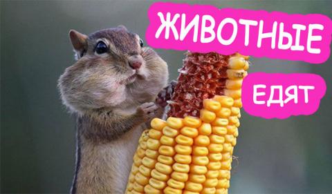 животные смешно и мило едят