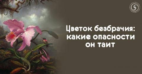Цветок безбрачия: какие опас…