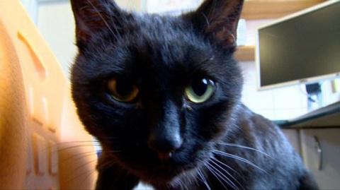 Этот кот-медбрат присматрива…