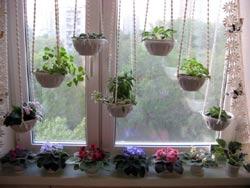 Цветы для нашего дома
