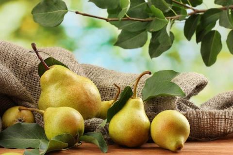 Как привить грушу. Советы начинающим садоводам