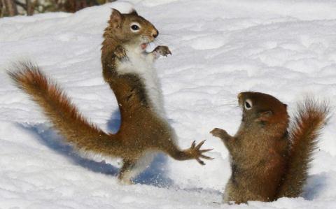 А по виду и не скажешь... Топ-5 маленьких, но очень жестоких животных