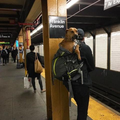 Жители Нью-Йорка нашли выход…