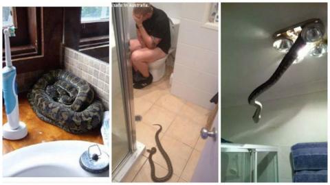 22 фотодоказательства, что Австралия - ад для офидиофобов