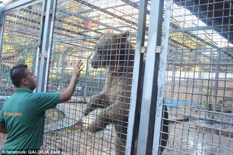 В зоопарке медведь откусил руку 9-летнему мальчику